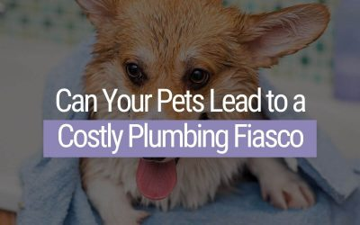 Can Your Pets Lead to a Costly Plumbing Fiasco?